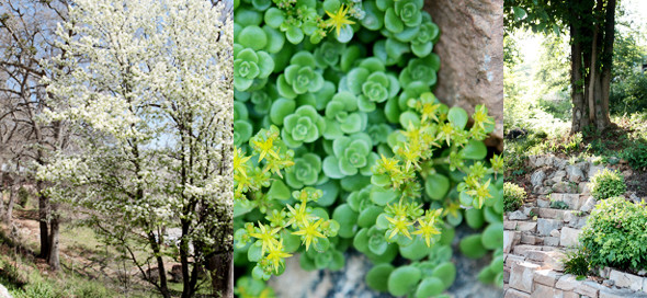 spring shrubs and trees